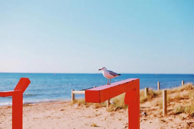 澳洲留学申请条件是什么